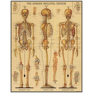Skeletal System 1000 Piece Vintage Jigsaw Puzzle