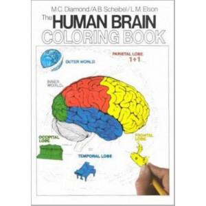 Human Brain Coloring Book The