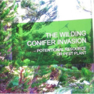 Wilding Conifer Invasion: Potential Resource or Pest Plant?