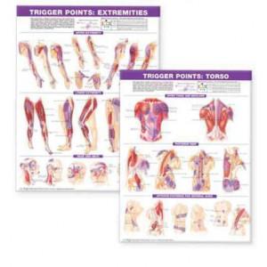 Trigger Point Chart Set : Torso & Extremities : Laminated