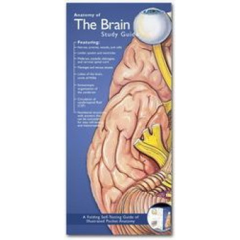Anatomy of the Brain Study Guide 2E - Illustrated Pocket Anatomy Series