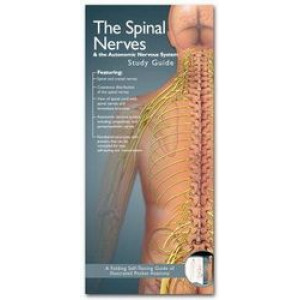 Spinal Nerves & the Autonomic Nervous System Study Guide 2E - Illustrated Pocket Anatomy Series