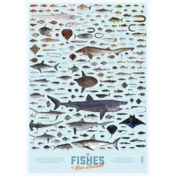 Fishes of New Zealand Poster A1 Matt Laminated
