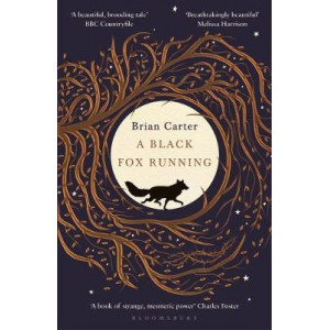 Black Fox Running, A