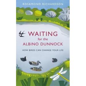 Waiting for the Albino Dunnock