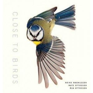 Close to Birds: An Intimate Look at Our Feathered Friends