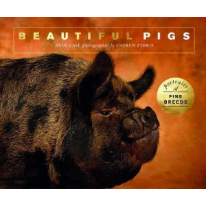 Beautiful Pigs: Portraits of champion breeds
