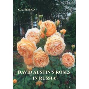 David Austin's Roses in Russia